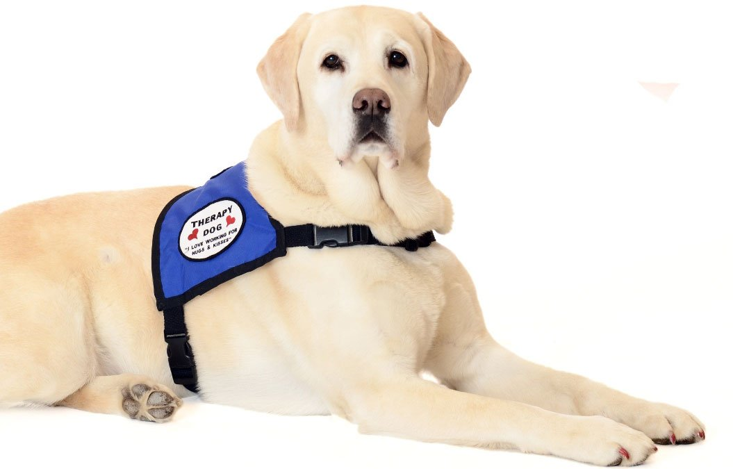 therapy-dog.jpg